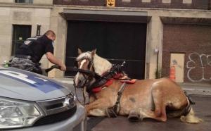 horse-traffic-cop
